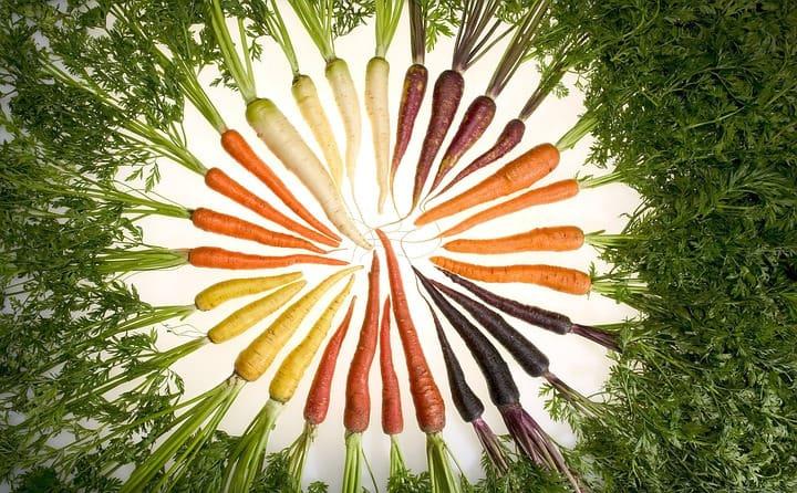 Rote, orange, schwarze, violette, weiße und gelbe Karotten im bilden einen Kreis